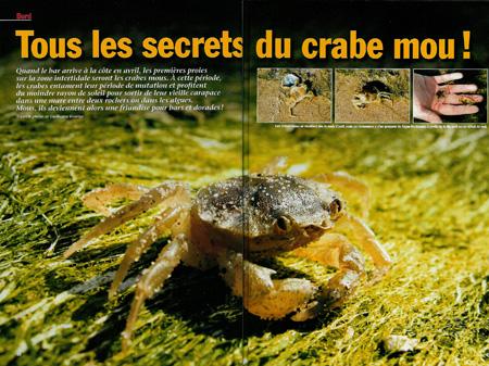 Pêche au crabe mou