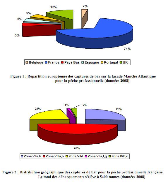 Fig.1 : Répartition européenne des captures de bar Manche Atlantique / pêche professionnelle. Fig.2 : Distribution géographique des captures de bar / pêche prof. française. Total débarquements = 5400 tonnes