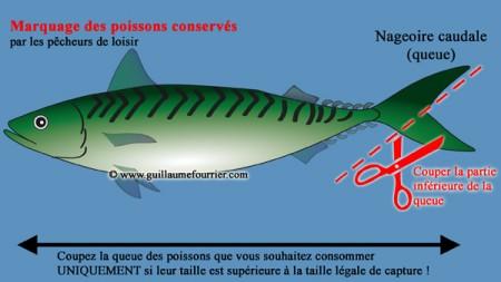 Marquage obligatoire des poissons conservés
