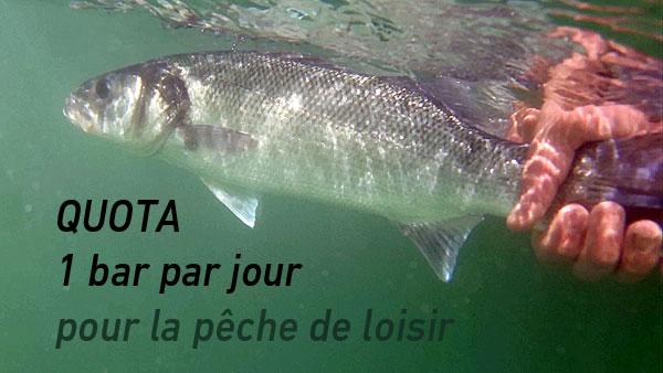 1 bar par jour pour la pêche de loisir